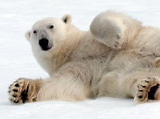 Arctic & Greenland and Russian Far East - Free Ship Delivery